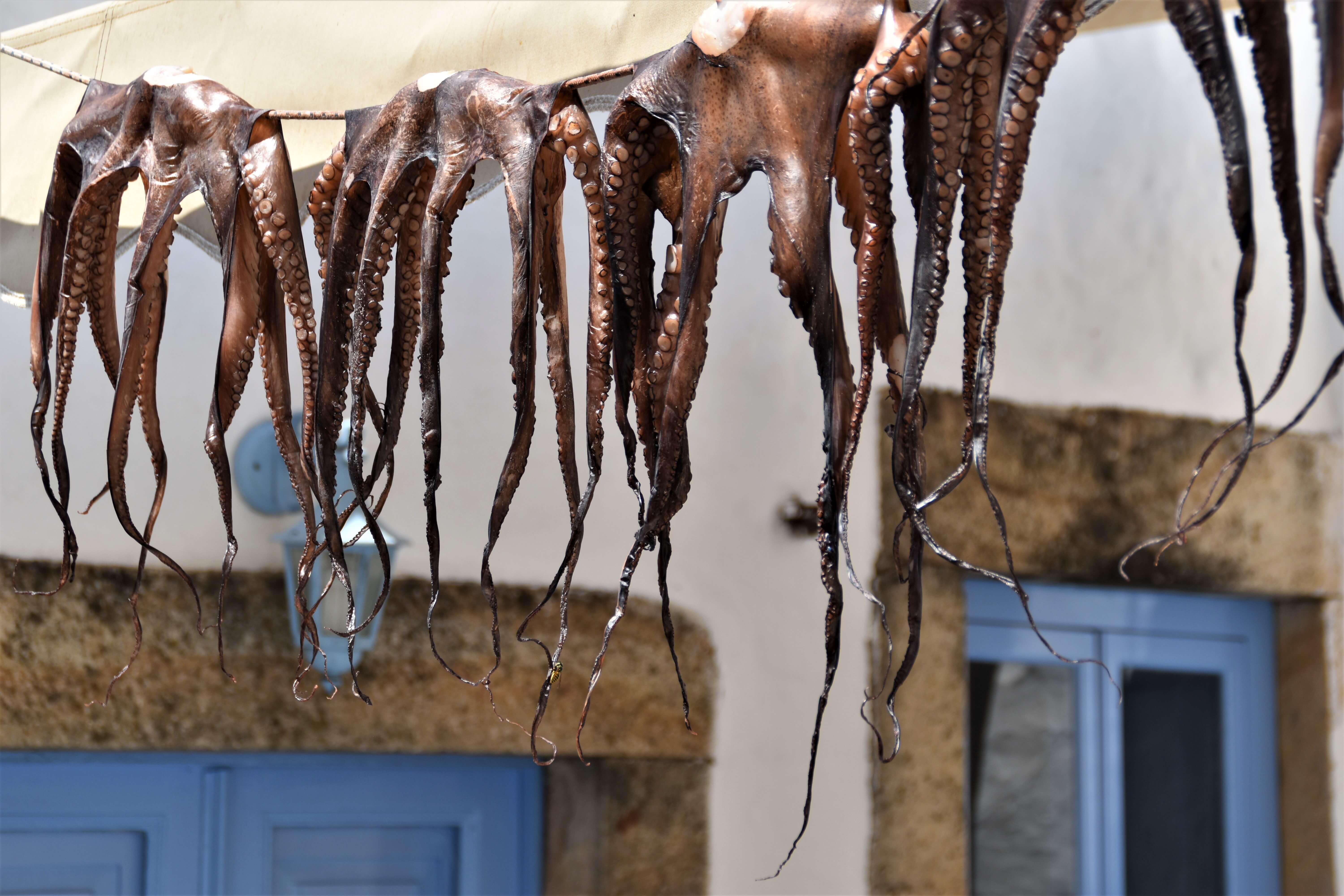 In a cloths line in the middle of a street, four octopuses are hung. In the background, the typical Greek white houses with blue doors and windows.