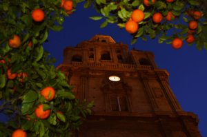 The cathedral tower at night, shot from the ground through the branches of an orange tree